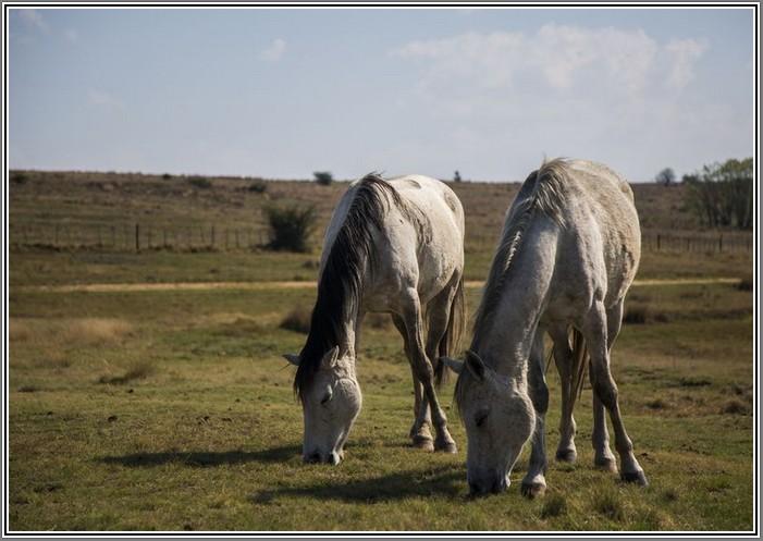 horse-lady-lada