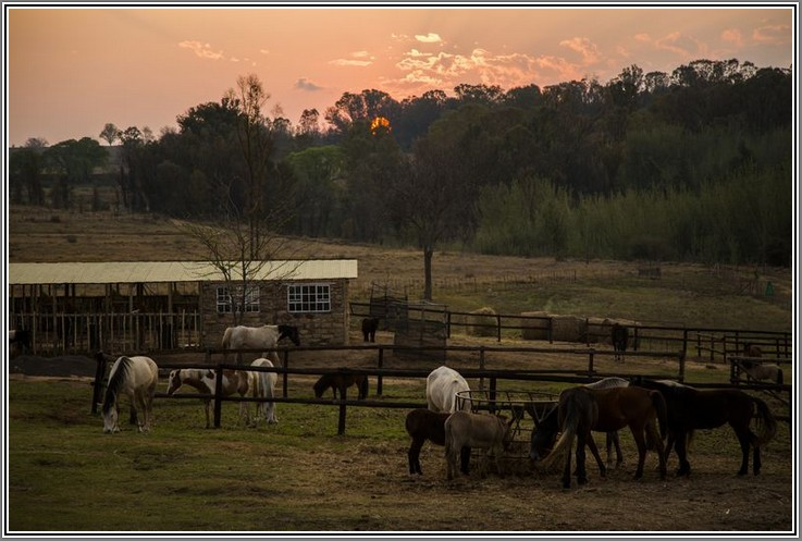 Sunset-of-Stables at Ventersberg farm