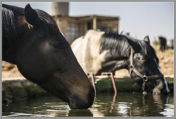 Thirsty work these horseback rides